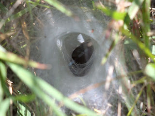 Funnel Weaver Web