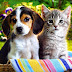 Bichos de estimação e animais vão para o Céu?
