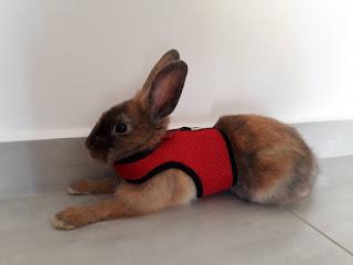 best rabbit equipment