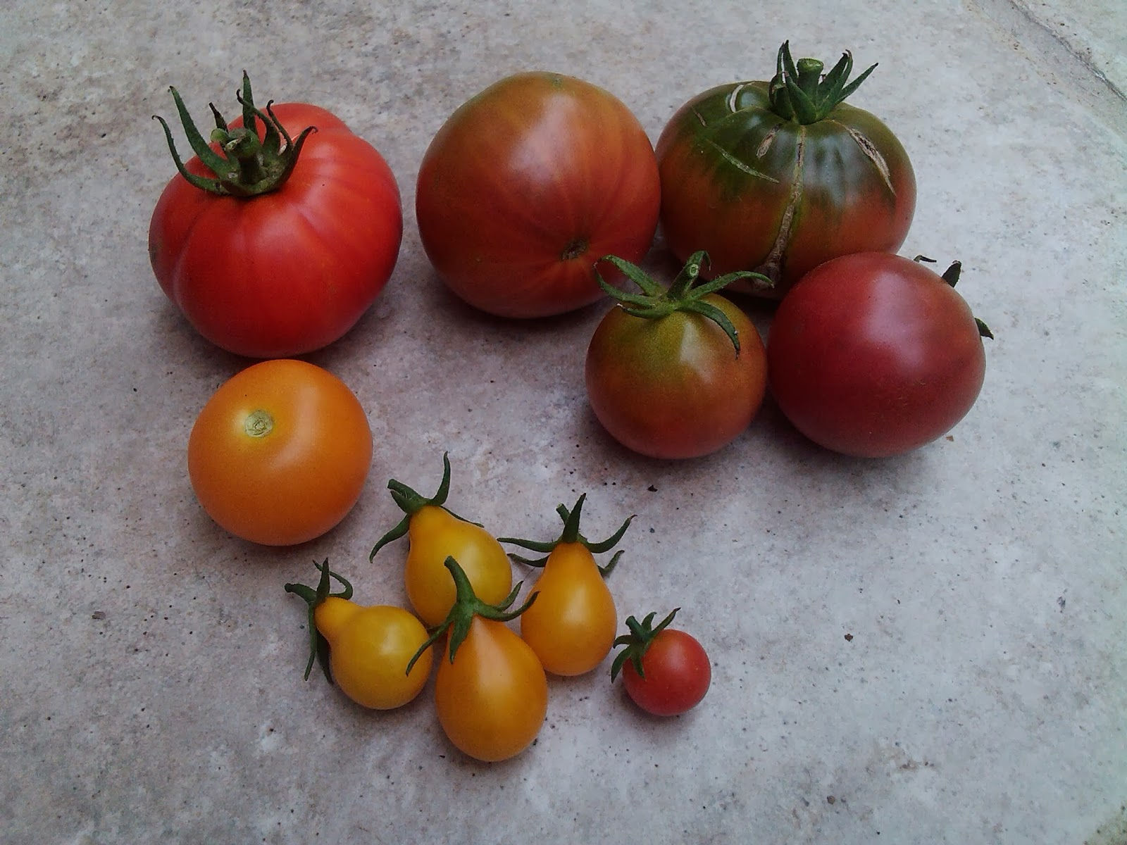 le potager d 39 aur lie qu 39 elle vari t de tomates chosir. Black Bedroom Furniture Sets. Home Design Ideas