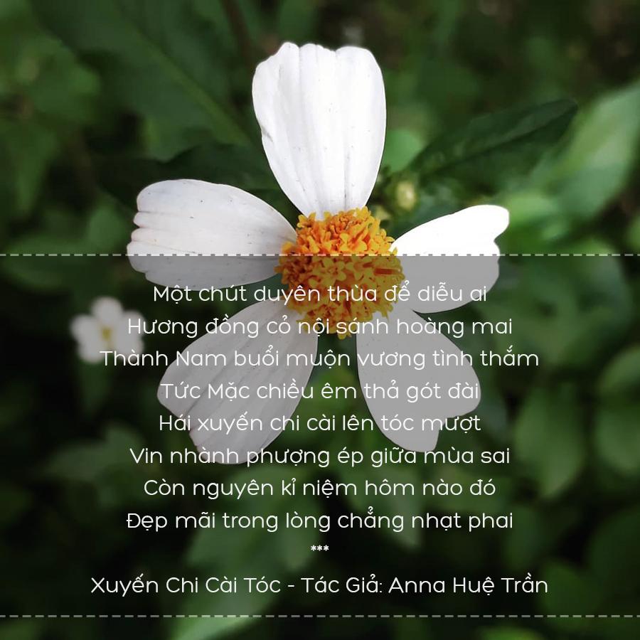 Thơ Hoa Xuyến Chi - Những Bài Thơ Hay Về Loài Hoa Xuyến Chi