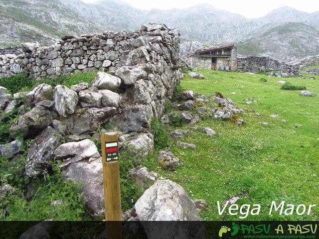Vega Maor