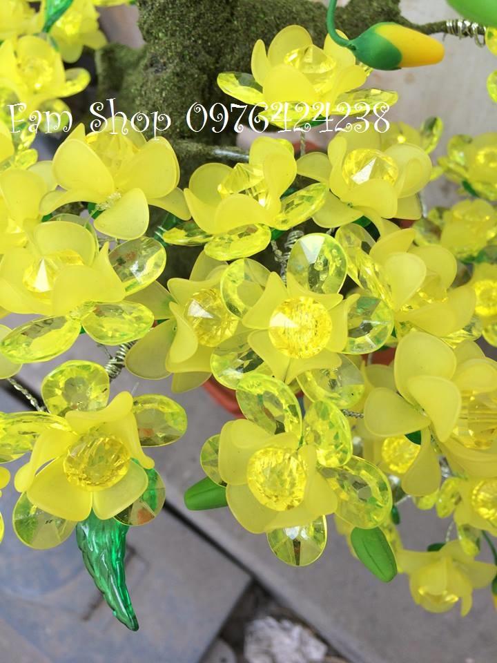 Hoa mai lam goc bonsai mai dao o Tran Binh Trong