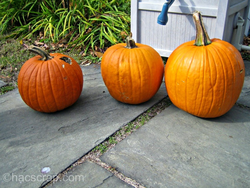Pumpkins ready to decorate