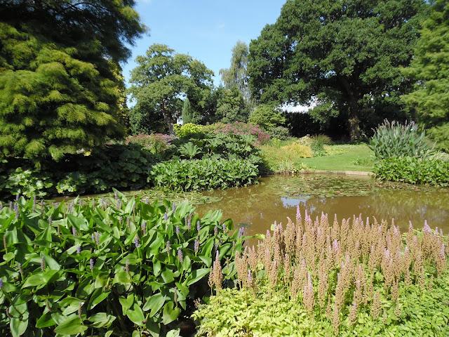współczesny ogród angielski, staw w ogrodzie