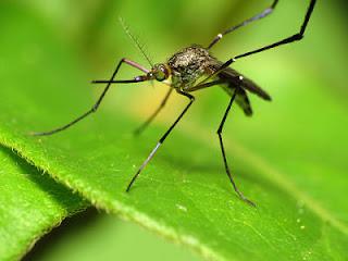 ahuyentar mosquitos, aliviar picaduras