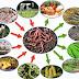 Mô hình nuôi giun phục vụ trồng rau sạch và chăn nuôi