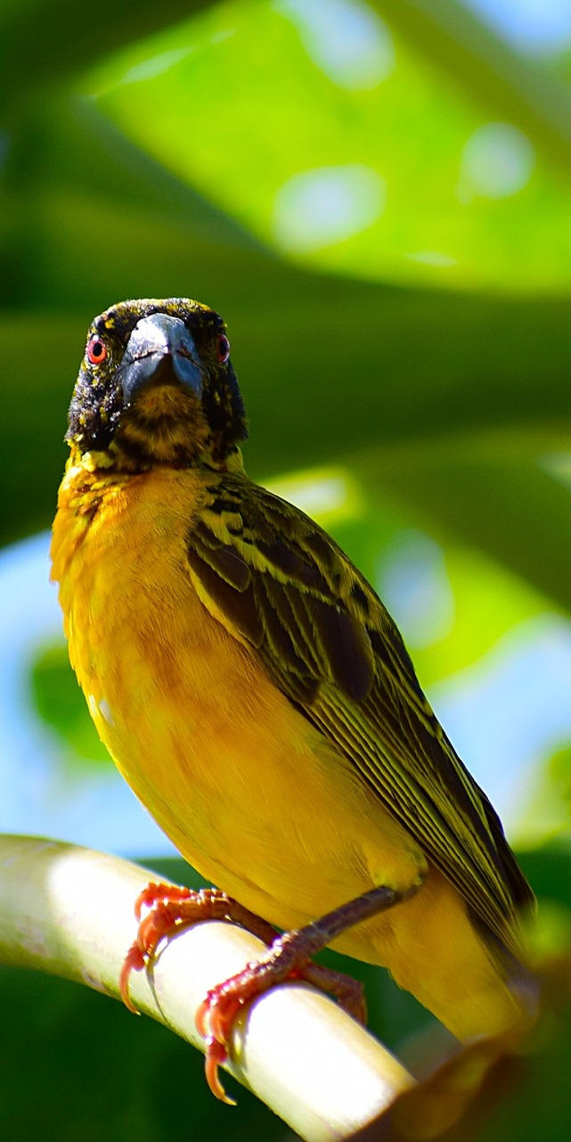 Picture of a warbler bird.