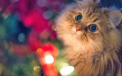 close-up-cat-lights-photo-wallpaper-1920x1200