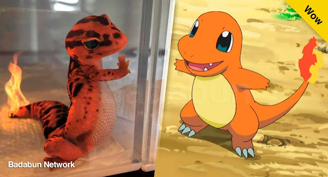 pokemon en la vida real charmander