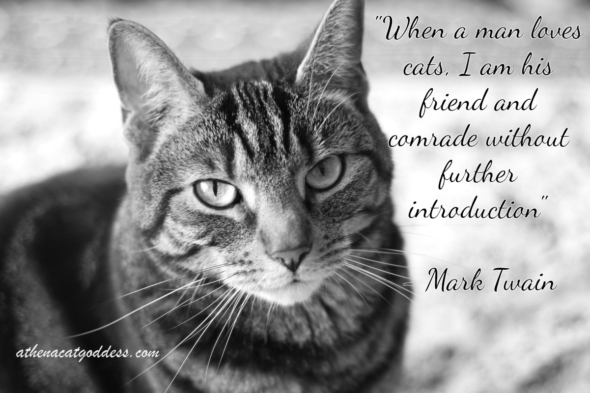 Quotes About Cats Athena Cat Goddess Wise Kitty Wednesdaywisdom Mark Twain Cat Quote