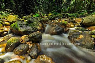 Sungai Jernih mengalir melewati lebatnya  pepohonan di Maras