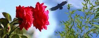 Gambar Bunga Mawar Merah Cantik Sampul Facebook