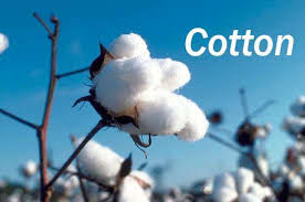 Agri commodity calls, Agri Commodity Tips, Free  Commodity Tips, Free Agri Tips, MCX Tips Services, Cotton Tips,