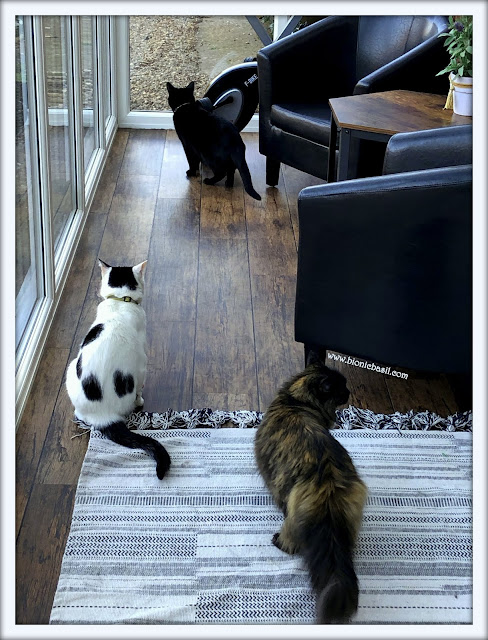 Sunday Selfies with Smooch, Parsley and Pandora @BionicBasil™ BBHQ 23-2-19