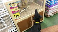 dog pet store