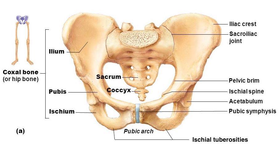 Cremaster muscle orgasm