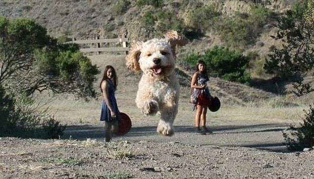Superbly Timed Photos That Make Dogs Look Like Giants