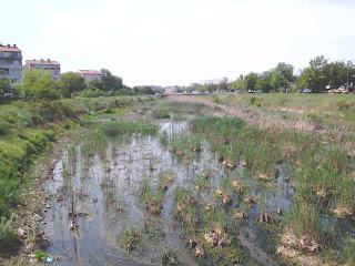 Yambol, River Tundzha, Healthy,