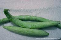 Pudalangai [ Snake Gourd ]