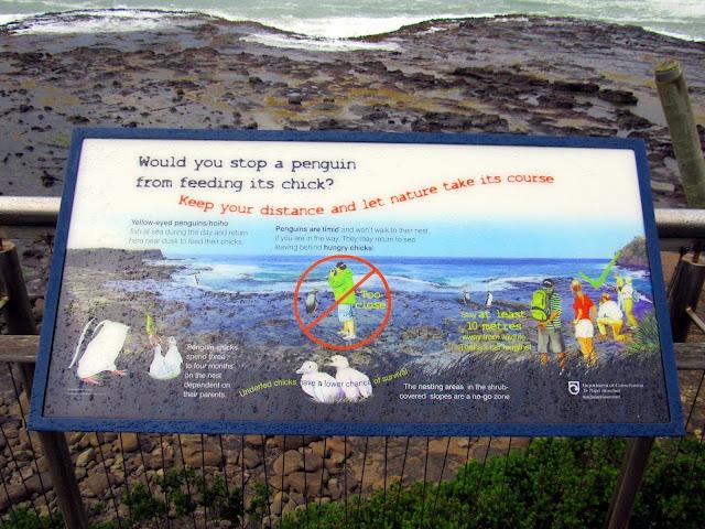 Cartel informativo en Curio Bay donde, entre otras cosas, se explica que no debemos acercarnos demasiado a los pingüinos para no asustarlos