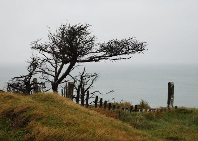 Wind, Wetter und eine eindrucksvolle Abwesenheit: Ein Ausflug zur Mårup Kirke bei Lönstrup. Auf Küstenkidsunterwegs berichte ich Euch von der Faszination, die die Kirche von Mårup auf Besucher ausübt und über die Auswirkungen von Stürmen und Salzwasser an der Steilküste südlich von Lönstrup. Ein toller Ausflugstipp für Euren Dänemark-Urlaub!