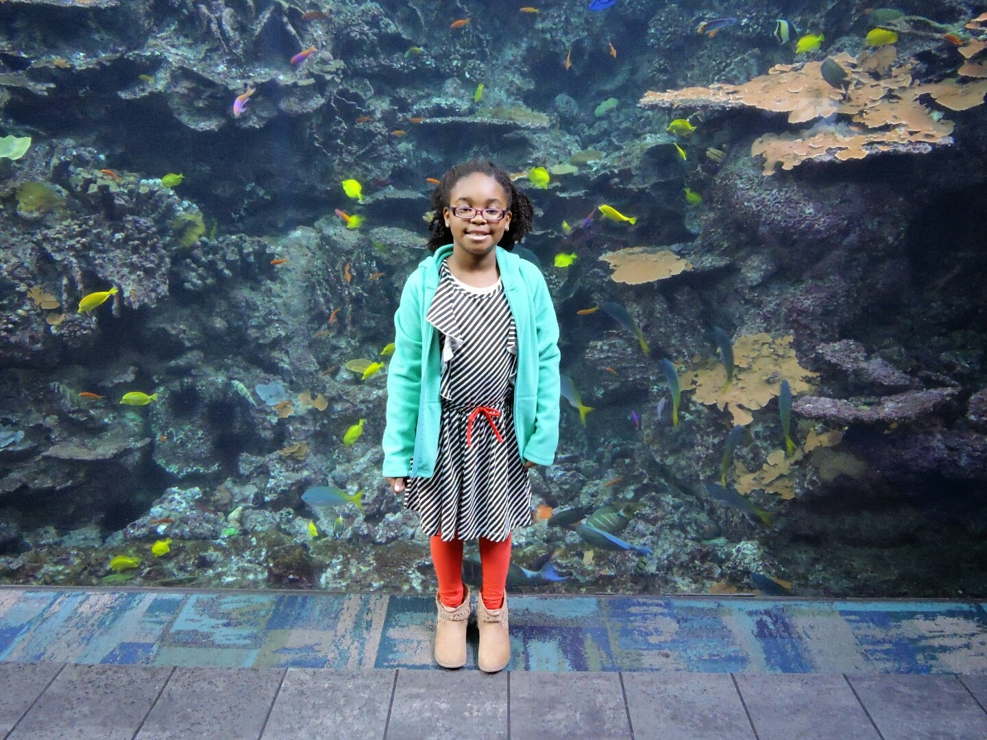 Top 5 Things To Do at Georgia Aquarium This Spring Break  via www.productreviewmom.com