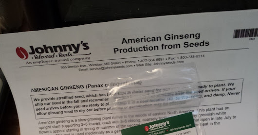 Fifty American Ginseng Seeds