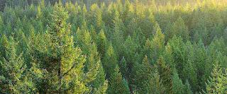 Παράταση για αντιρρήσεις έως 30 Μαρτίου για τους Δασικούς χάρτες