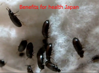 Benefits for health Japan