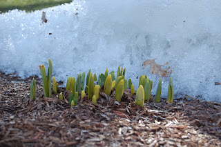 sign of spring against the snow