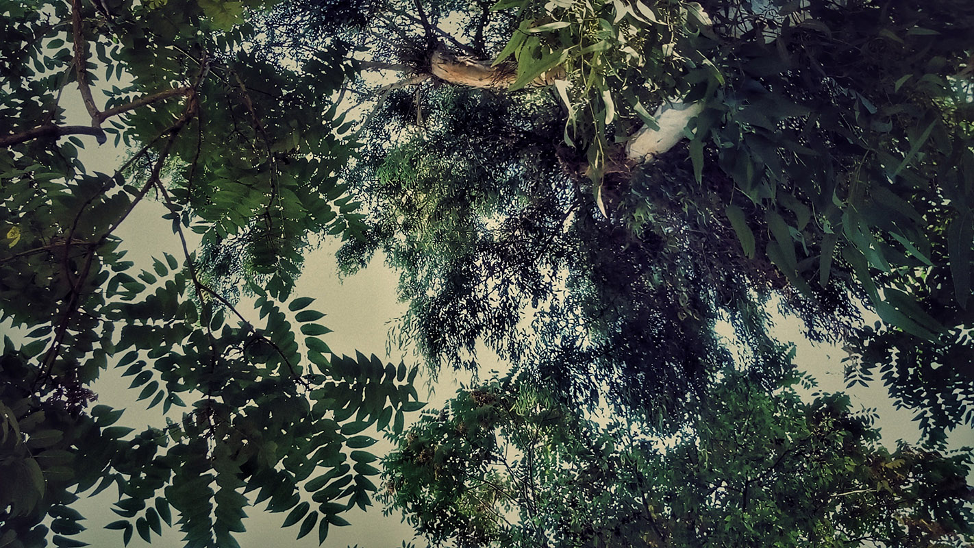 Photo of dark green trees with heavy jungle foliage shot from below, against a gray sky. 'Trees from Below' photo by Kostas Gogas.