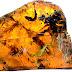 Откриха пиле на изкопаема птица, застинало в кехлибар