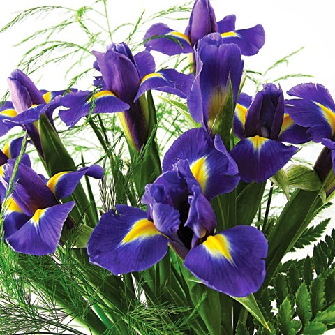 7 Fascinating Facts About The Iris