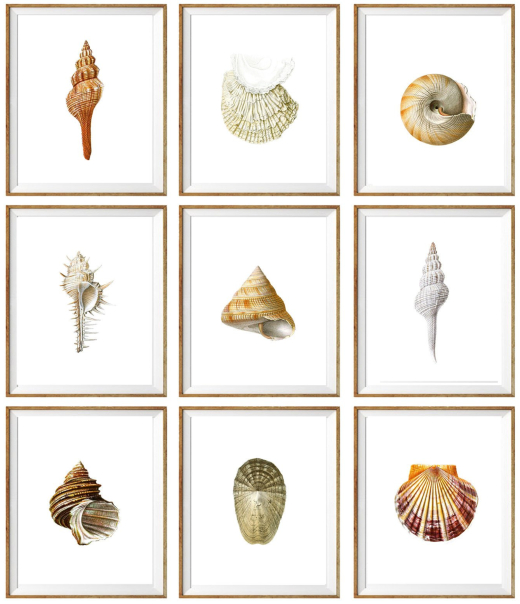 Printable Seashell Art