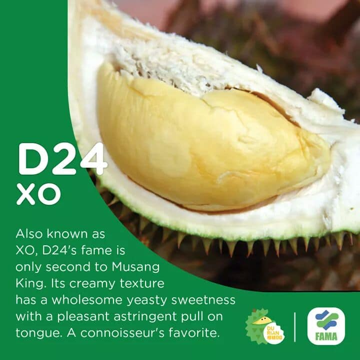 This image has an empty alt attribute; its file name is Jenis%2BJenis%2BDurian%2B17.jpg