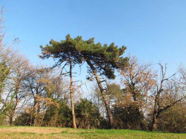 carbonio che risale isola di quercia