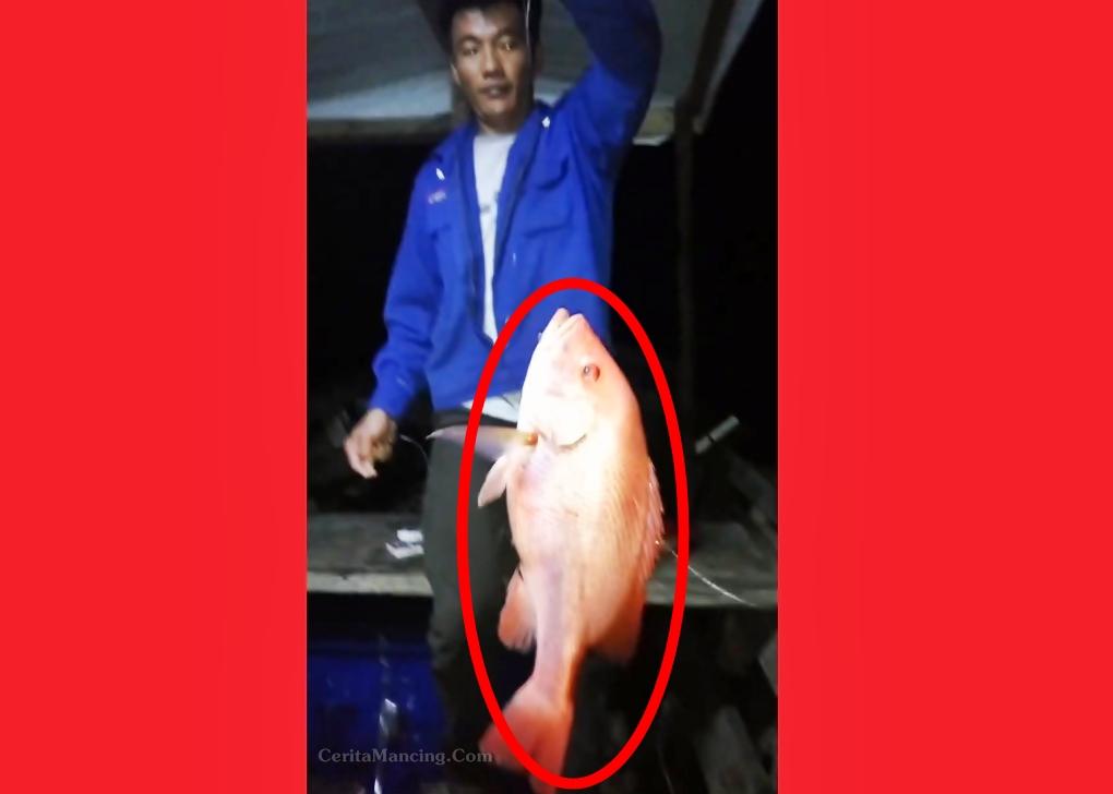Mancing Handline Senang Hati Dapat Ikan Kakap Merah Besar