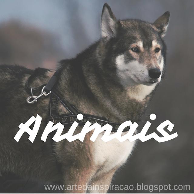 cachorro, cão, animal, animais, maus, tratos, denúncia, denunciar, maltratar, amor,