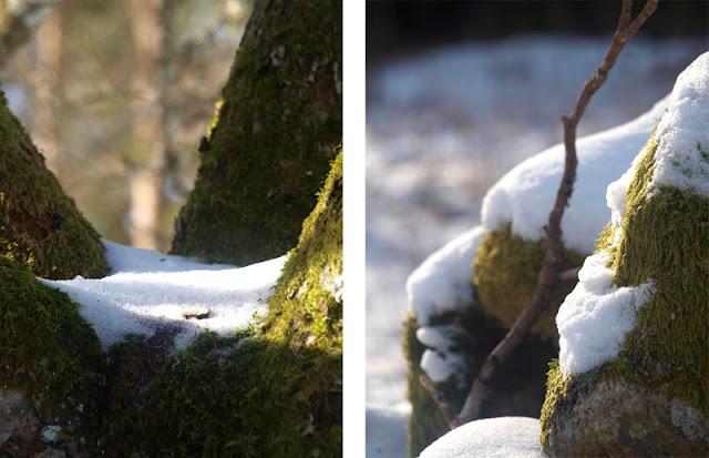 Svenske skove om vinteren