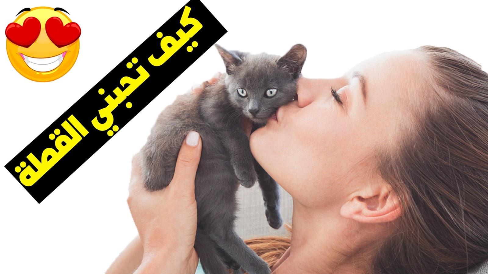 كيف تظهر الحب لقطتك ؟ 11 طريقة تفهمها القطط 😍