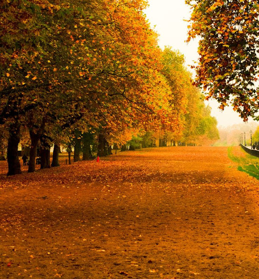 This Autumn I Wish For You.................
