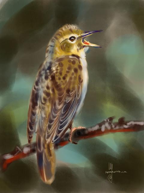 Grasshopper Warbler bird painting by Artmagenta