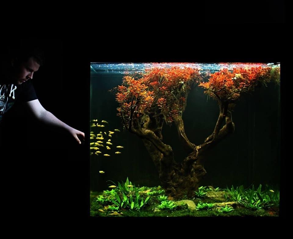 Hồ thủy sinh bon sai với cây lá đỏ