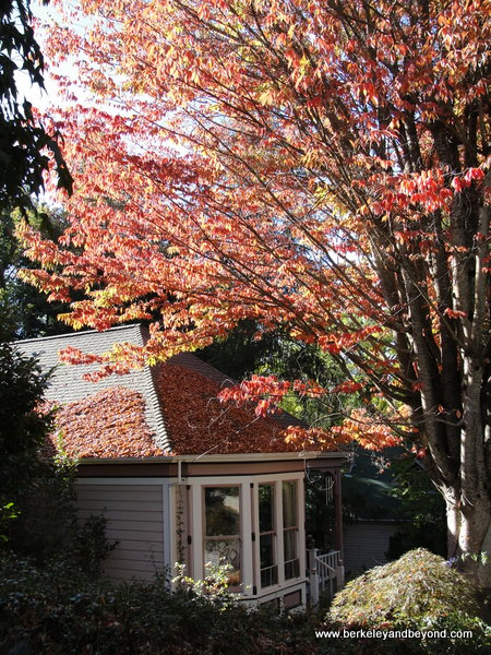 fall colors in Nevada City, California