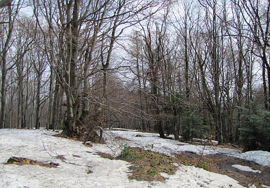 Las na Świerzowej.