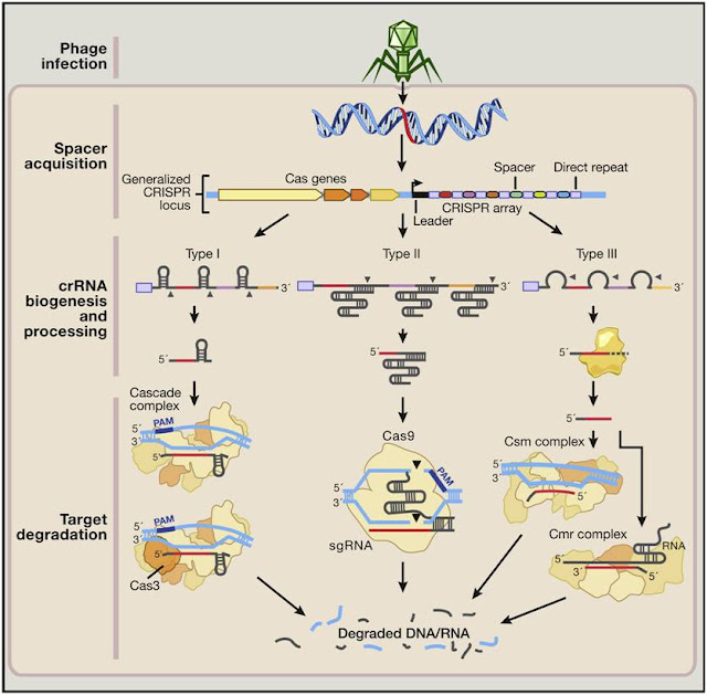 CRISPR-Cas9 technology mechanism