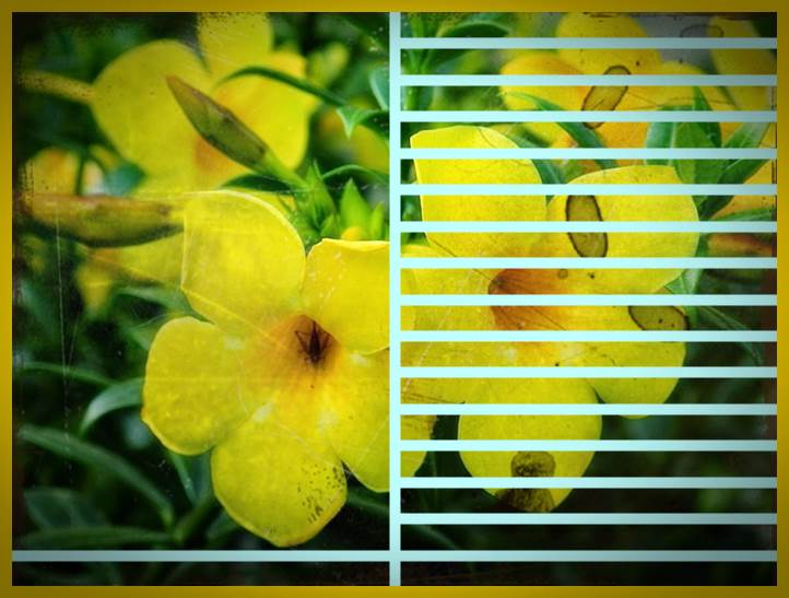 macam macam tanaman hias dan gambarnya 2016