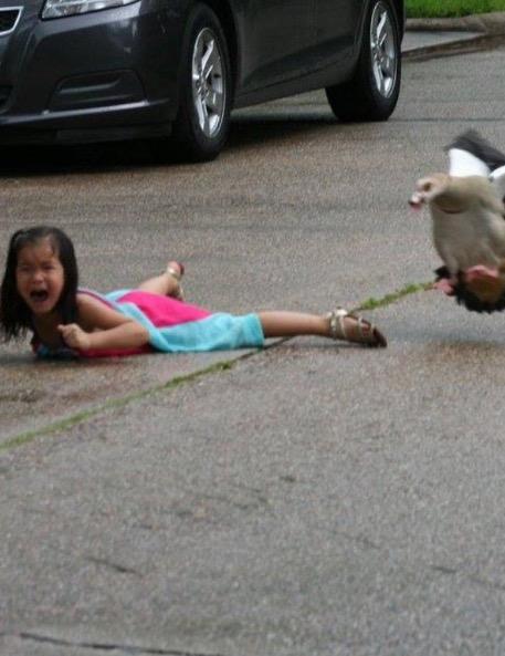 Gambar Budak Perempuan Diserang Angsa Jadi Viral