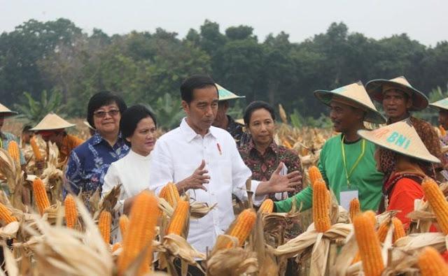 Gagal Kelola Pertanian Pemerintah Impor Jagung